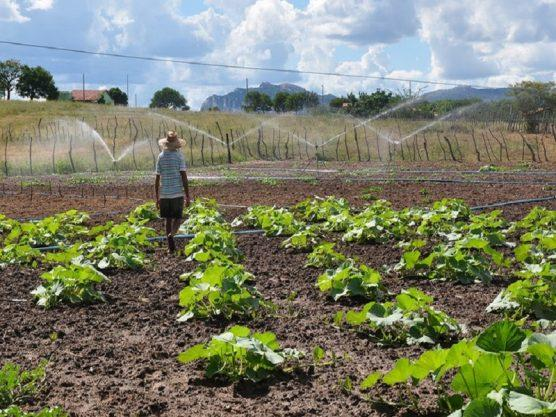 Paraíba Online • Projeto Dom Helder Câmara tira mais de 2,7 mil famílias da pobreza no semiárido